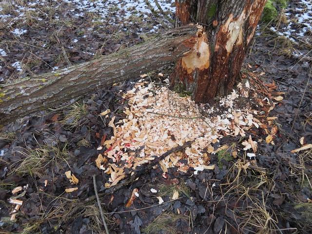 Kobras veritses. Fosforiidimaa / Phosphate Rock mining area in Estonia