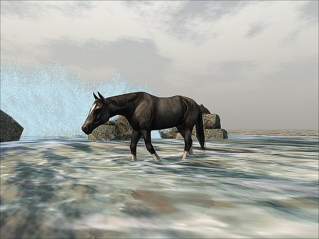 Grauland - Splash of Horseplay