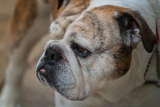 All Bark and No Bite | by John Brighenti