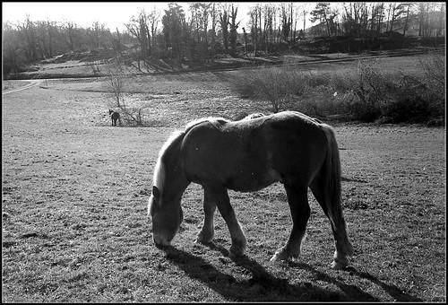 cheveaux  horses | by Bokey Shutter