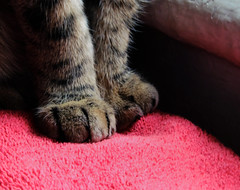 Gerry's paws