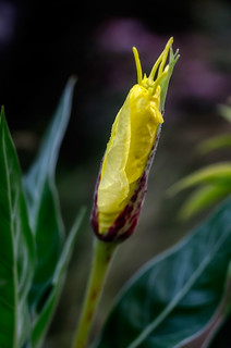 (3 of 3) - Three times bokeh, color behavior and sharpness of a...