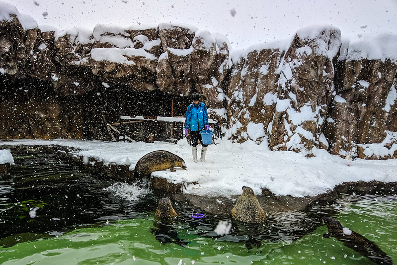 Asahiyama Zoo / 旭川旭山動物園