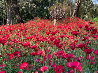 City Season - The Linum Rockery, Nehru Park | by Mayank Austen Soofi