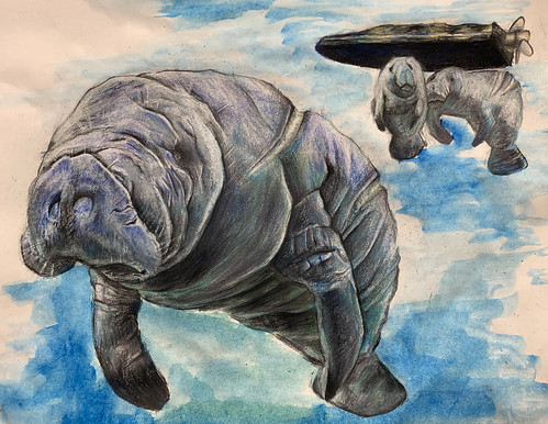 West Indian Manatee | by Endangered Species Coalition