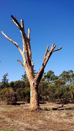 tree sculpture   by leogaggl