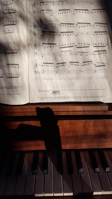 dappled harpsichord
