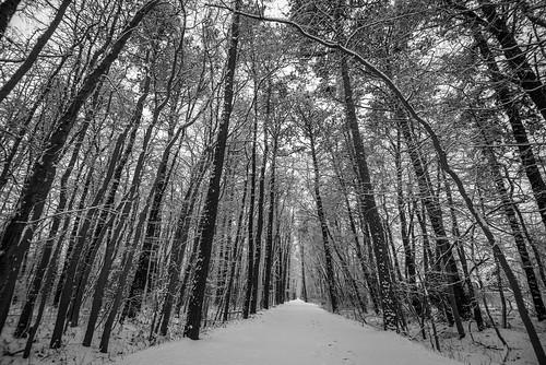 barnegattrail trail railtrail snow trees waretown nj newjersey footsteps hometown dogwood dogwood2019