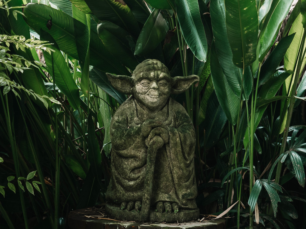the yoga barn yoda