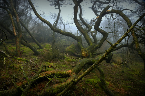 theroaches staffordshire trees storm damage monsters peakdistrict spider arachnid