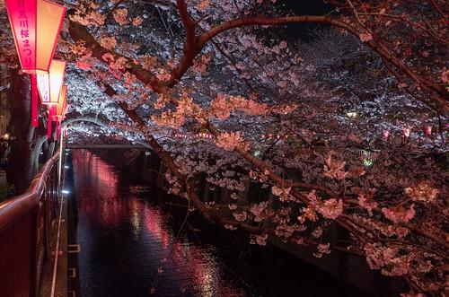NakaMeguro Hanami | by telyas