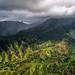 Cruisin' over Kauai by Darren Barnes Photography