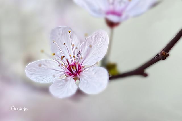 Macro-signo  de primavera