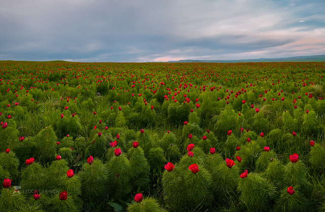 Evening blooming steppe