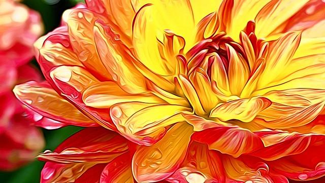 Blumenblüten mit Wassertropfen