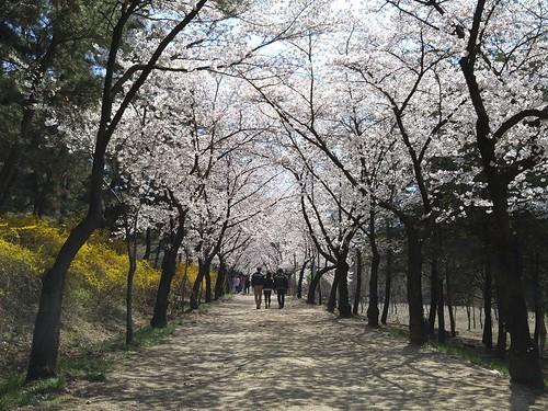 Love Road Yeungnam University | by zack.amirullah