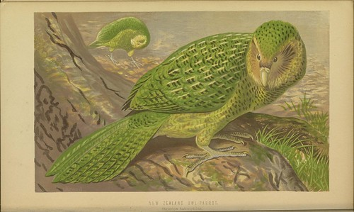 n79_w1150   by BioDivLibrary