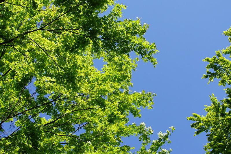 Sony α7Ⅱ+AF S NIKKOR 24 120mm 1 4G ED VR東池袋中央公園の深緑