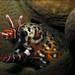 Dragon Moray (Enchelycore pardalis) by Brian Mayes