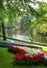 Landschaft - Tulpenbl�te am Bacherl