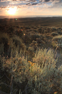 Sagebrush Community and Landscape