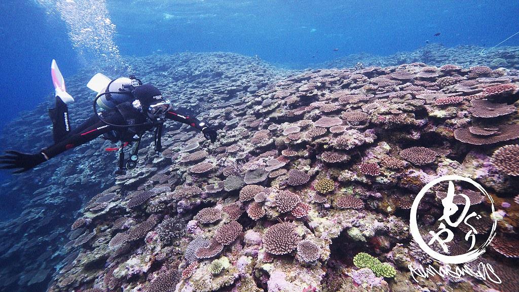 珊瑚の上を漂うダイバー