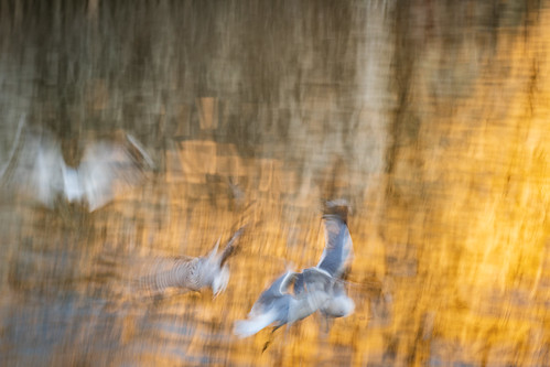 Intentional blur practice   by Birgit F