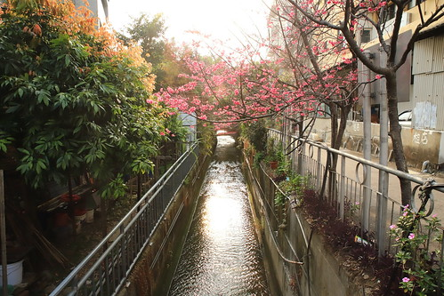 landscape tree sunset waterway blossom 桜 さくら 夕焼け