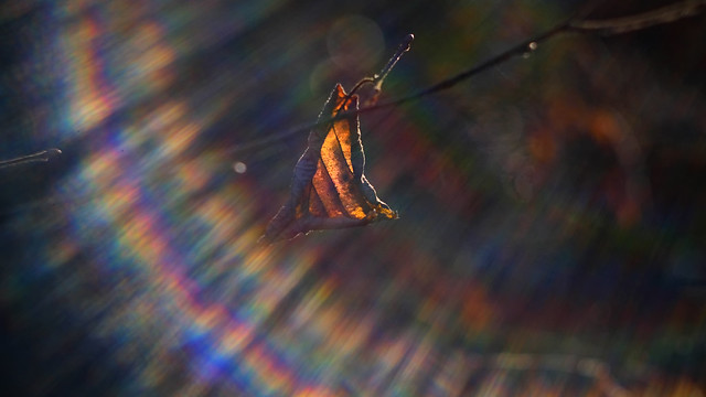 . . . rainbow flares