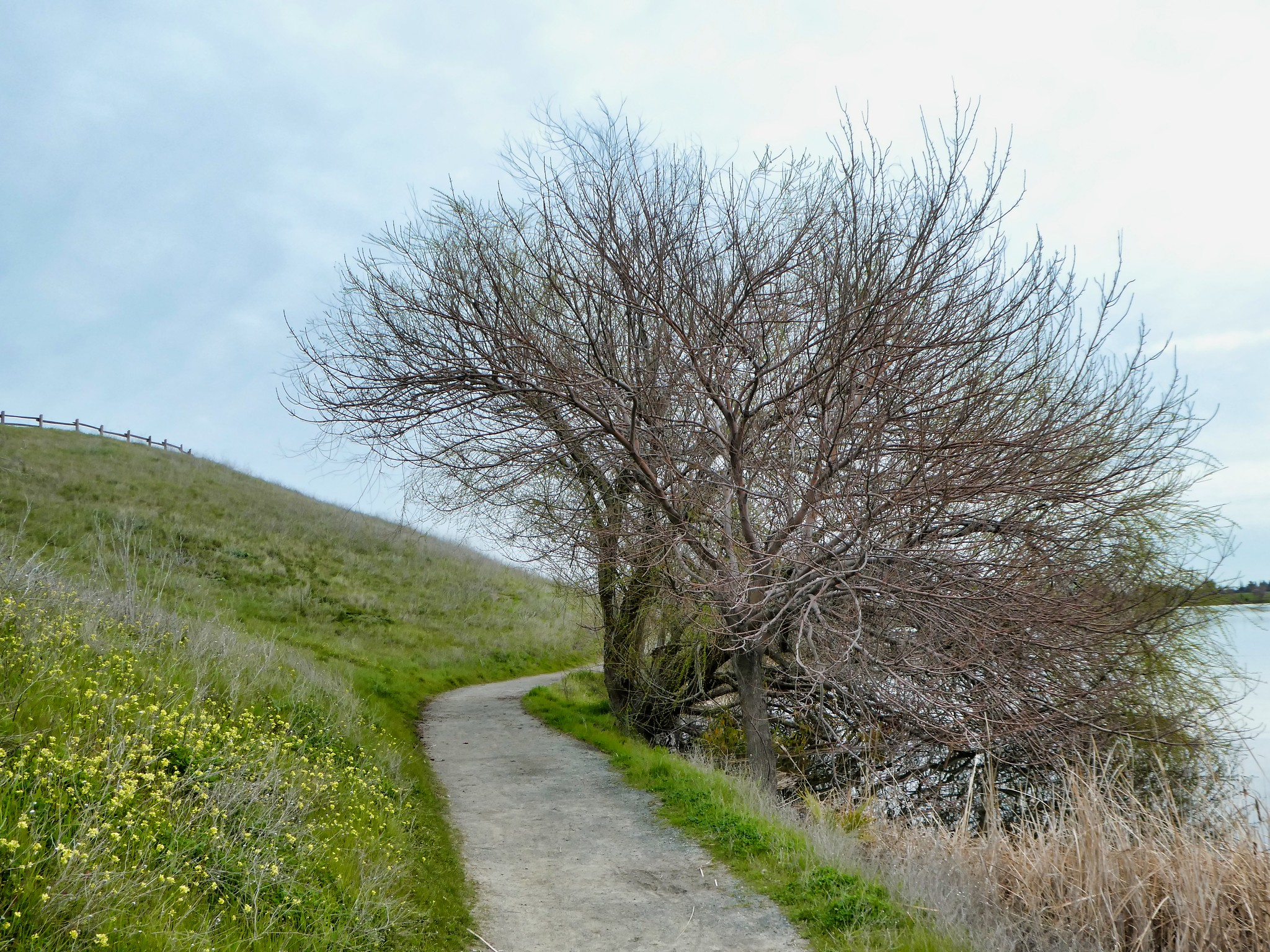 2019-02-24 - Nature Photography - Morning Walk at Contra Loma Regional Park