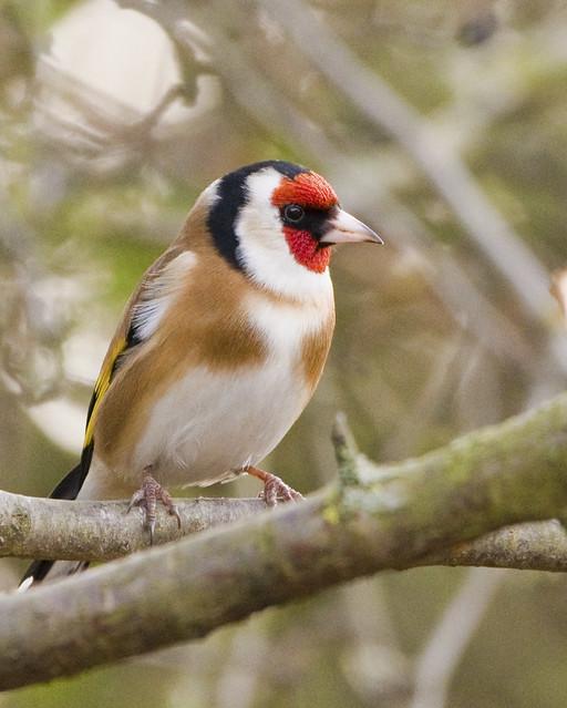 Colourful birdy.