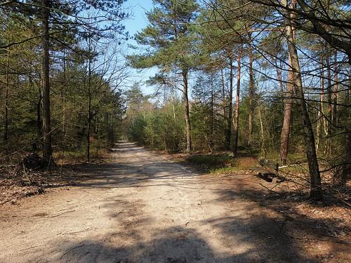 1460543 panasonicdmcfz150 sallandseheuvelrug nijverdal overijssel nederland netherlands holland landschap landscape landschaft paysage bos forest woods ngc