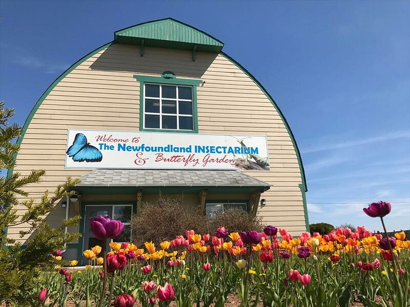 best places to visit in New Foundland and Labrador