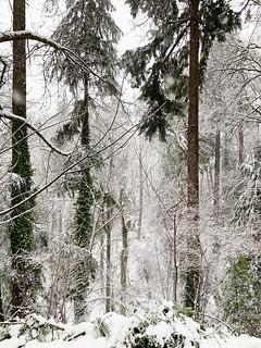20190211 snowzilla-39   by schnell foto