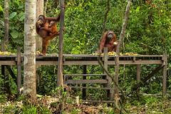Nationalpark Tanjung Puting