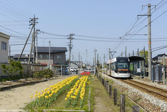 Tulpen uit / Tulips from ... Toyama (富山市)