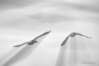 Speed Flight | by Alfred Grupstra