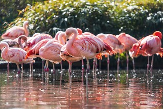 Flamingos   by Michal Hruby Photography
