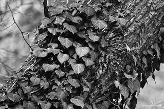 Végétal   by bertrand.fontaine