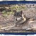 And_Out_Come_The_Wolfes-08-12-38 AM-