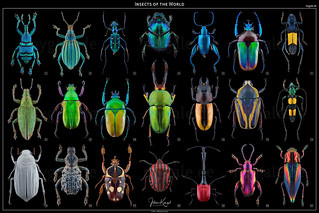 Insects of the World 2016-2018 | by mygale.de