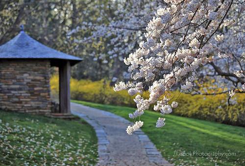 Springtime: Gardens of Dumbarton Oaks:
