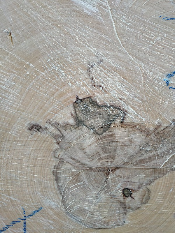 Wood texture #04