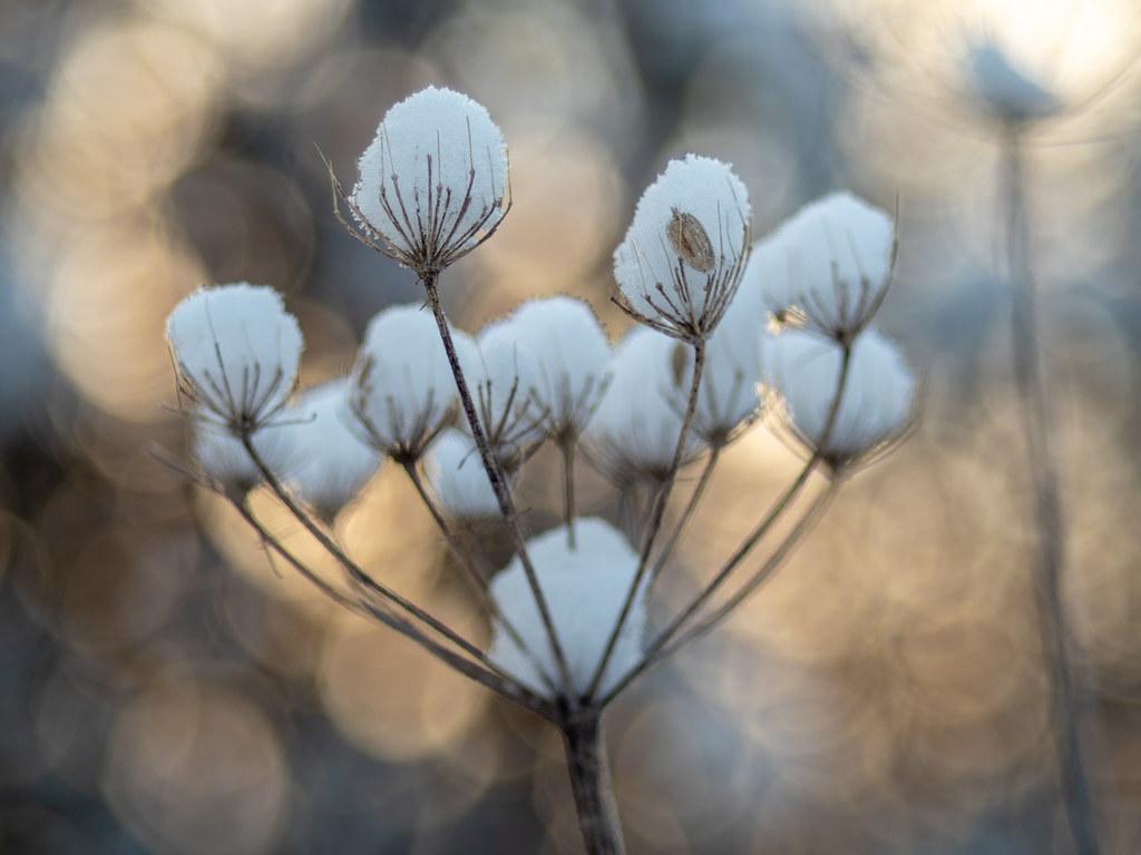 Wintermorning impression
