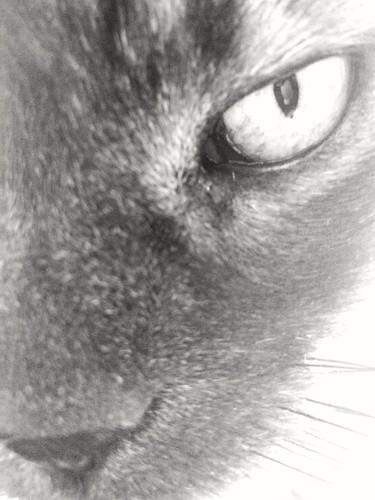 Me ves. Te miro. | by arsaediciones