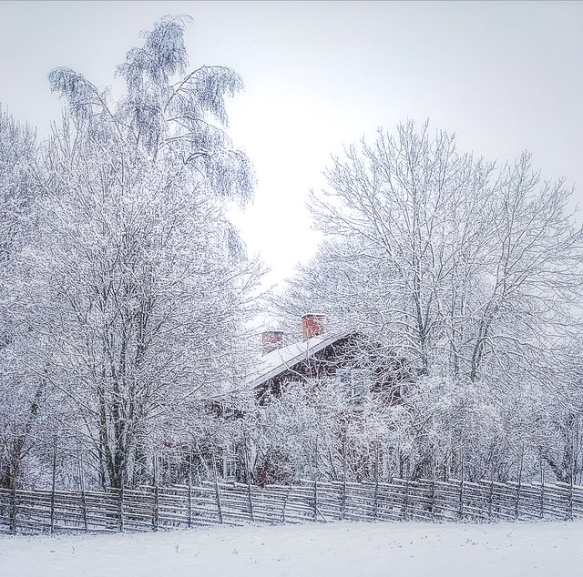 ~ hiding ~ Riddarhyttan Sweden