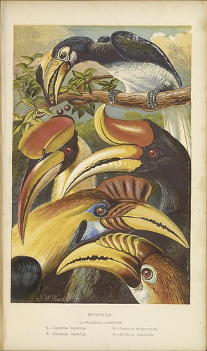 n42_w1150 | by BioDivLibrary