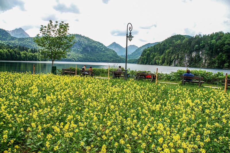 阿爾卑斯湖(Alpsee) 7