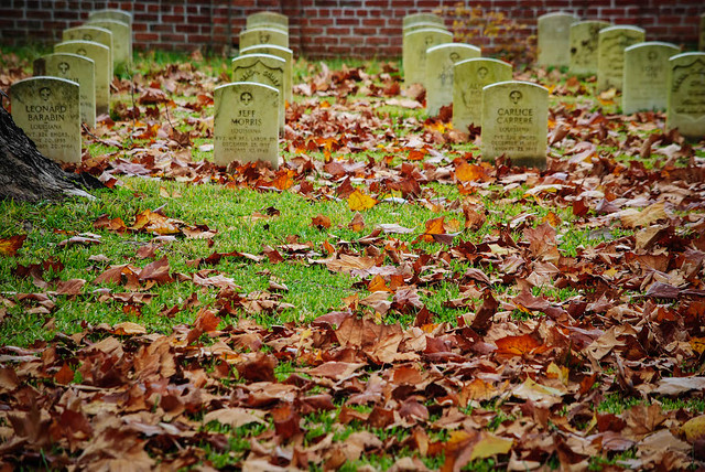 Fallen Leaves and Fallen Heroes
