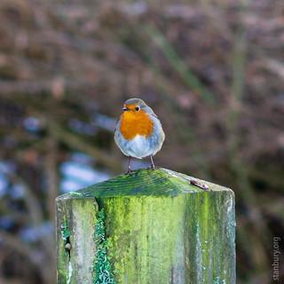 Warburg Reserve, Bix Bottom   by FlickrDelusions